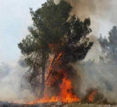 إغلاق الشارع باتجاه القدس وإجلاء سكان بسبب حريق في حرش